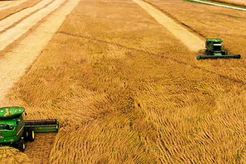 Supply Chain Crunches Affecting Agriculture – From Farm to Table